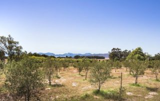 Boerfontein Olive Cottage Mountains Wide Angle