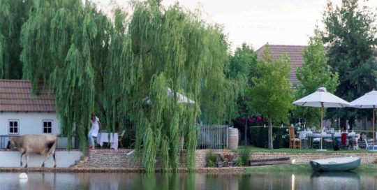 Weeping Willow Tree Hanging Over Dam